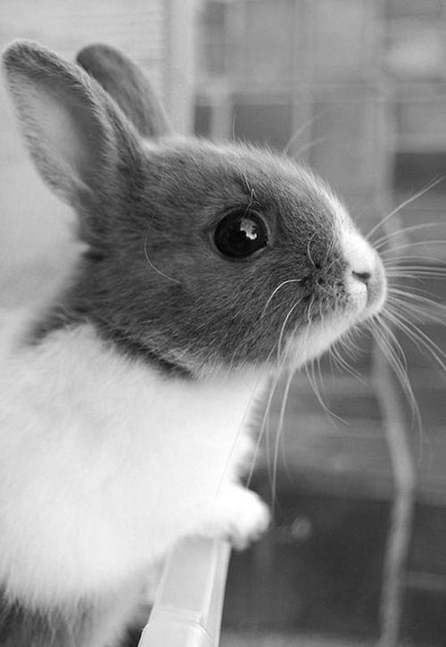 black, black and white, bunny, cute - image #780240 on ...