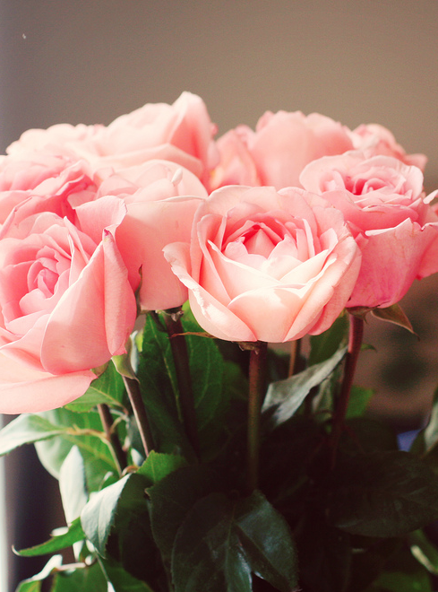 cute, fashion, flowers, girly, light, love, lovefeeling, lovely, nice, photography, pink, rose, roses, sweet