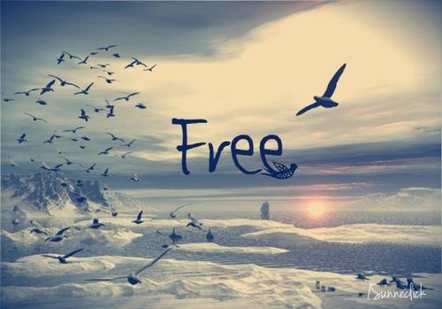 free, free bird, text, typography - image #775073 on Favim.com